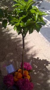 fruta acompañando a arbolito